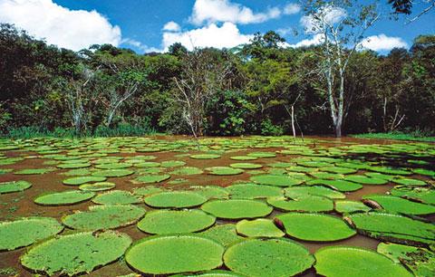biodiversid.jpg